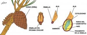 esquema_piña