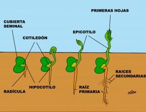 hipogea (2)