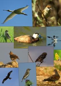 Colección aves