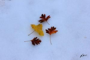 Hojas y nieve