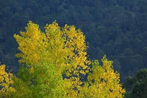 Paisaje otoño Cazorla