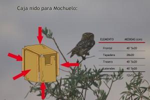Caja nido para mochuelo