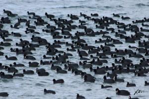 Grupo de fochas