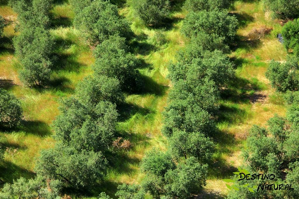 Olivar y biodiversidad