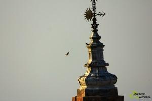 Torre de la Victoria y primillas