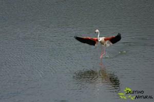 Flamenco aterriza
