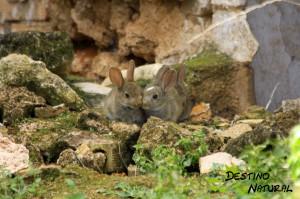 Conejos en la finca