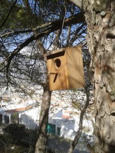 Cajas nido páridos (4)