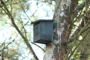 Caja nido Estepa Gilena