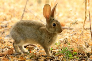 Conejo en el refugio