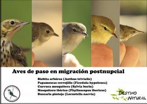 Aves de paso por el Refugio