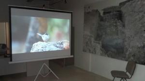 Video de Aves