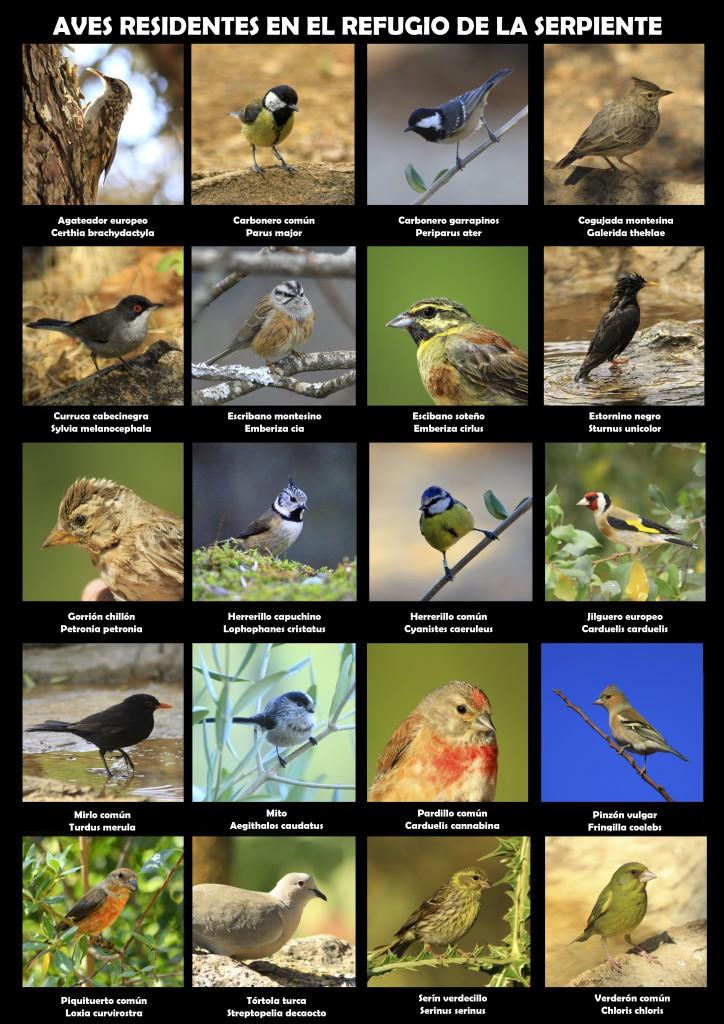 Aves sedentarias Refugio