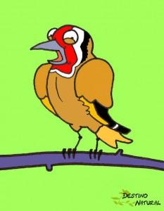 Jilguero aves caricatura