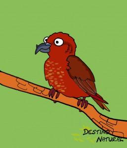 Piquituerto aves dibujo