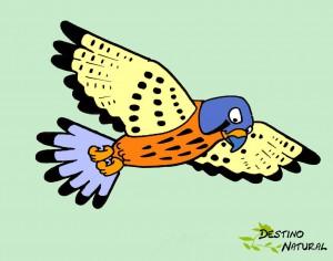 cernicalo-vulgar dibujo