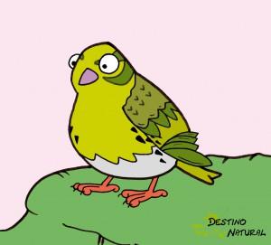 verdecillo dibujo aves