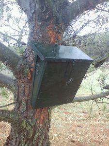 Nuevo diseño de caja nido