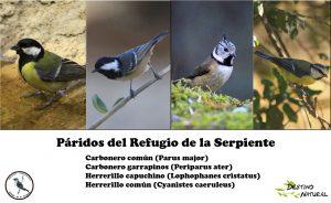 paridos-del-refugio