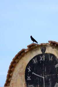 Grajilla sobre reloj