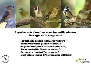 Especies abundantes anillamiento