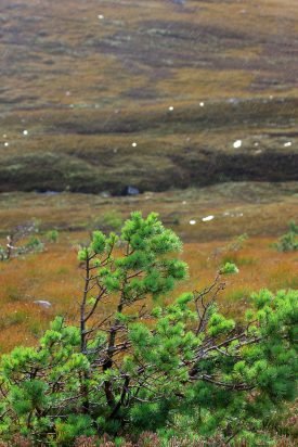 Lluvia en Cairngorms