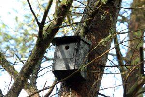 Cajas nido