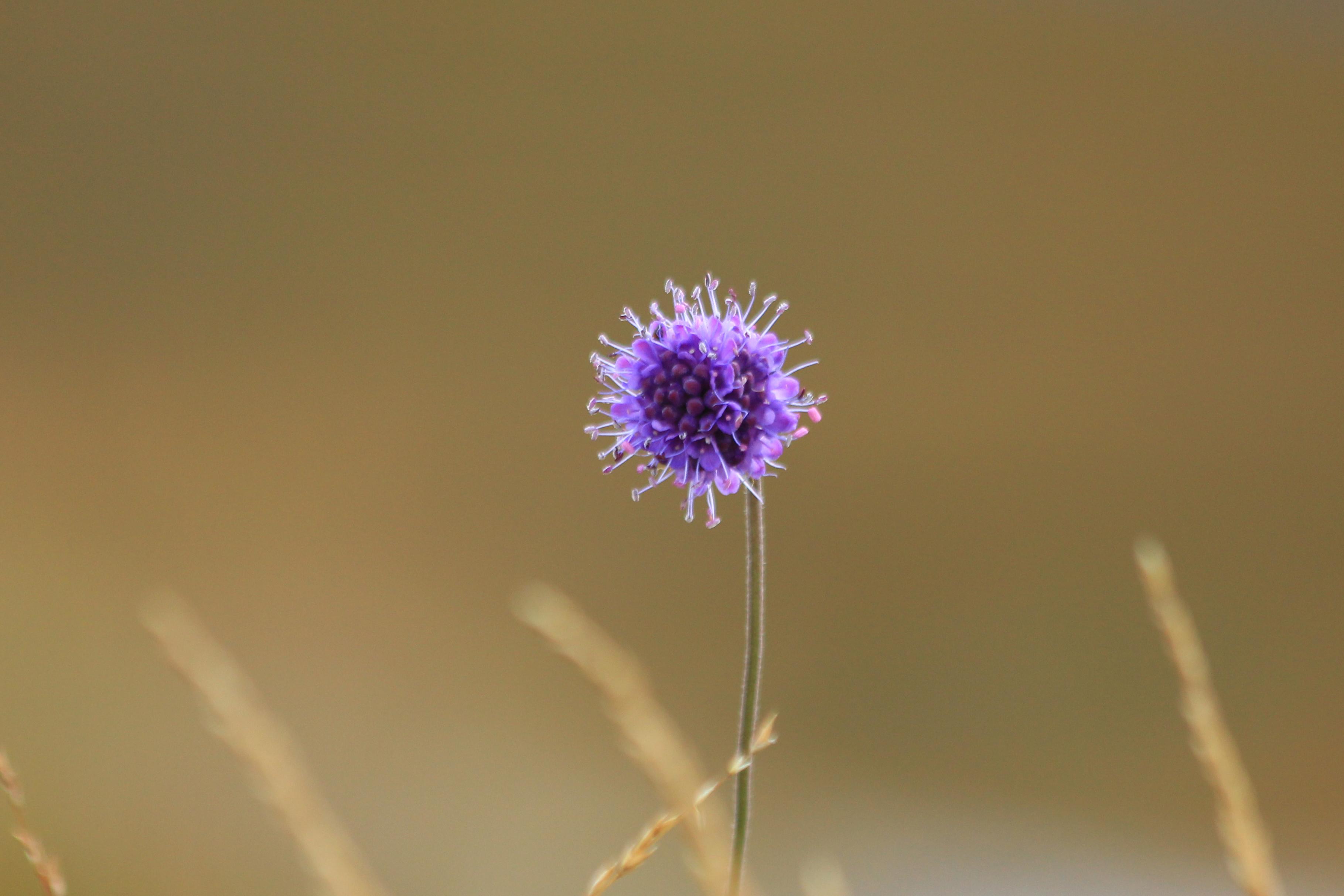 Flor en Escocia