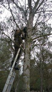 Colocando cajas nido