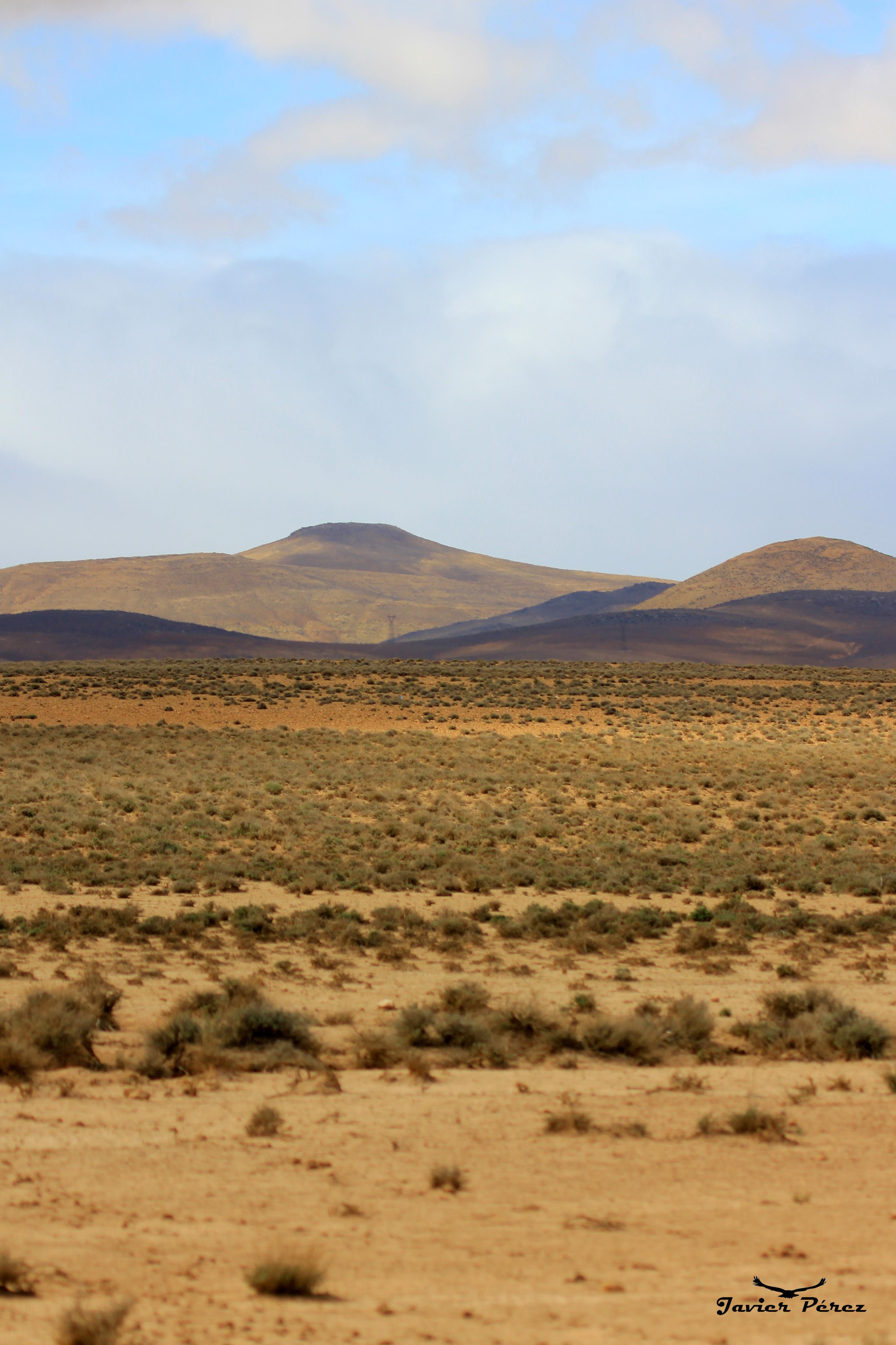 Desierto y matorral