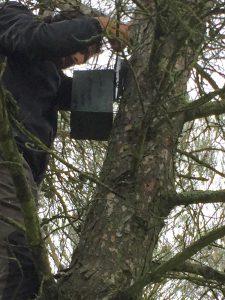Revisando las cajas nido