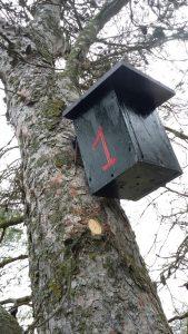 Caja nido 1