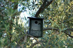 Caja nido en el olivar