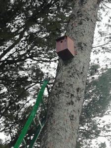 Caja nido Estepa