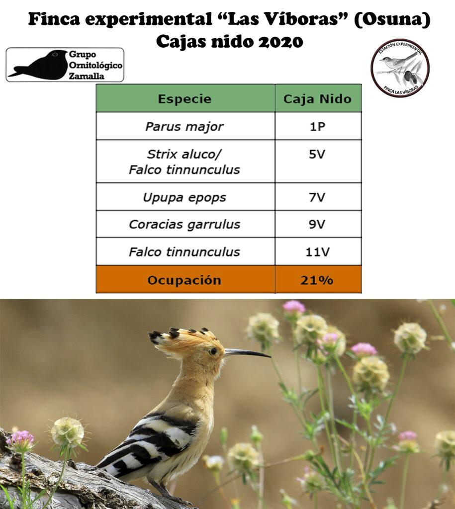 Revisión cajas nido las Víboras (Osuna)
