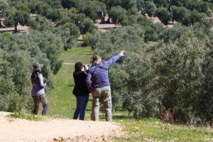 Observando aves en el olivar
