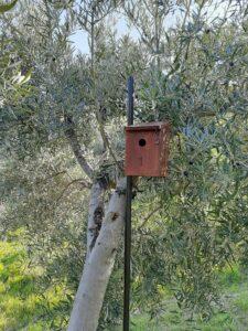 Cajas nido olivar